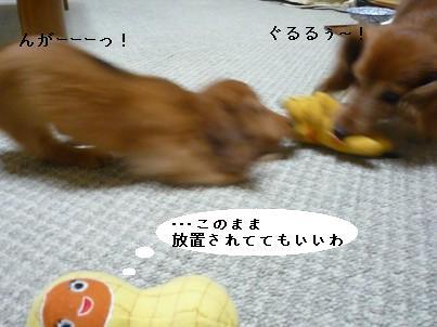P1050219blog.jpg