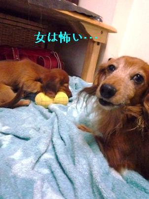 P1050331blog.jpg