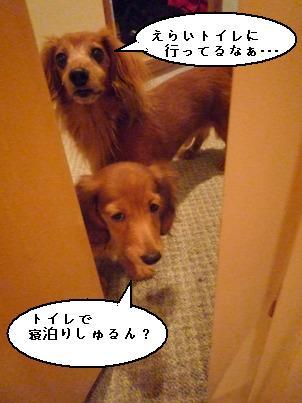 P1050351blog.jpg