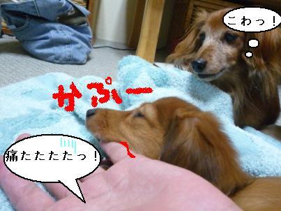 P1050439blog.jpg