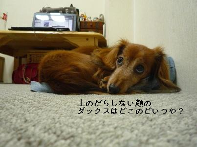 P1050934blog.jpg