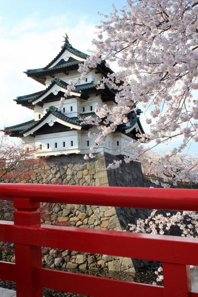 弘前の桜2