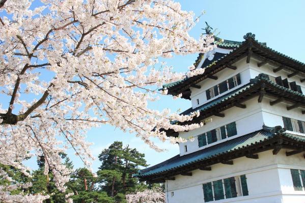 弘前の桜9