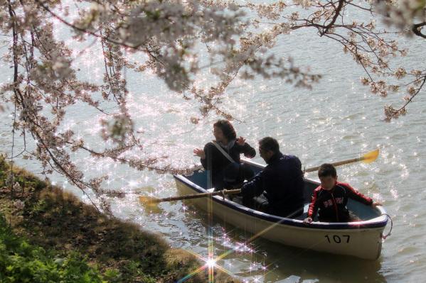 弘前の桜5a