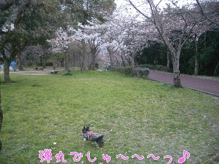 写真00258