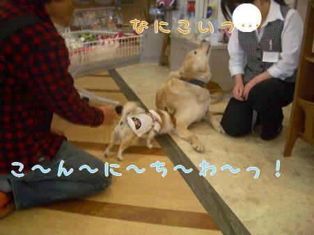 写真00158