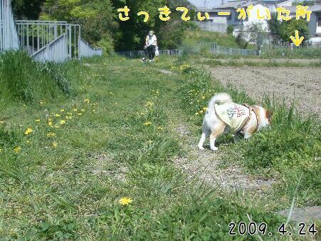 写真00175