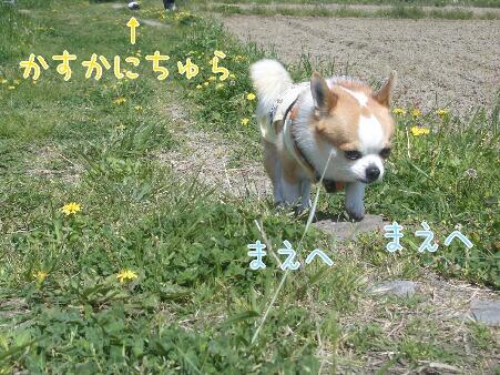 写真00176