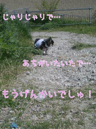 写真00181