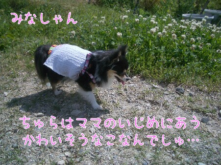 写真00182