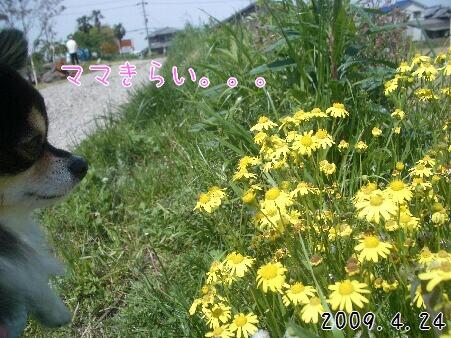 写真00183
