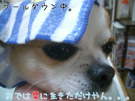 写真00188