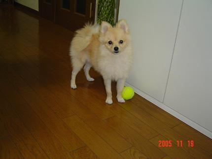 2005-11-19(5)