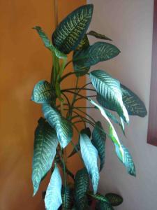 fiori mamma2 2008