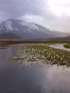 至仏山と水芭蕉