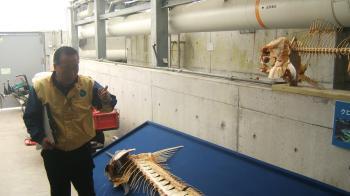 2010年 4月25日 水族館ボランティア