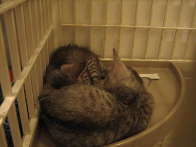 寝る捨て猫ーズ