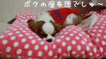 001_p_20090130135854.jpg