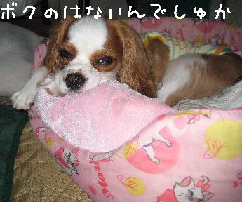 133_p_20090131030338.jpg