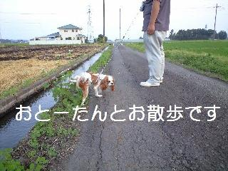 530_p.jpg