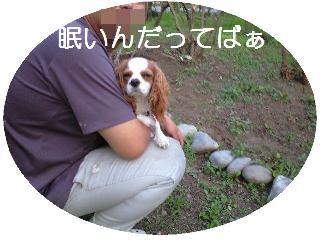 534_p.jpg