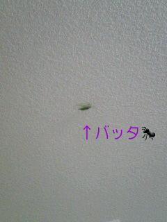 img20070911_ta.jpg