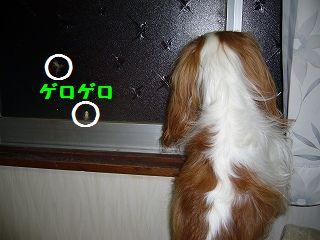 zzz030_20090802052720.jpg