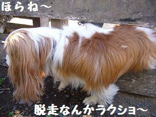 zzzp010_20090412020932.jpg
