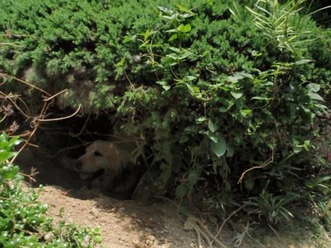 さりぃちゃん地下2