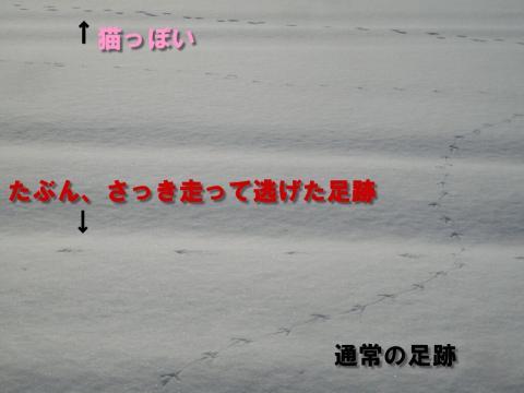 IMGP101200.jpg