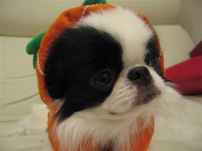 まちゅかぼちゃ