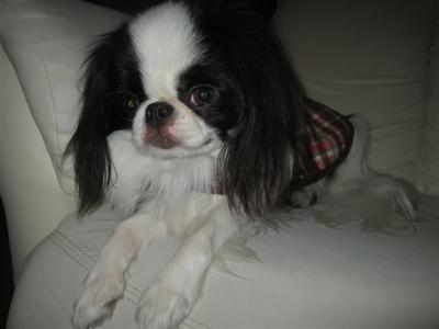dogfan3