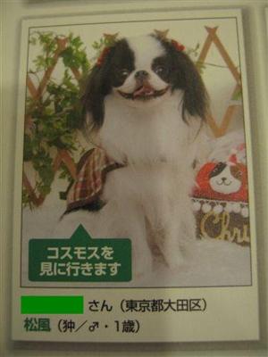dogfan1