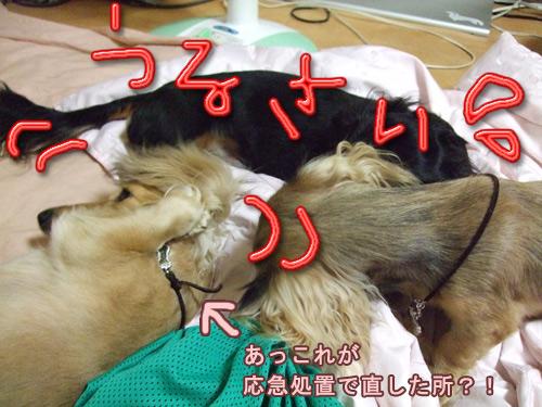 20070902-010.jpg