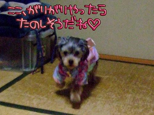 20080102-008.jpg