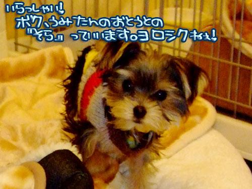 20080111-010.jpg