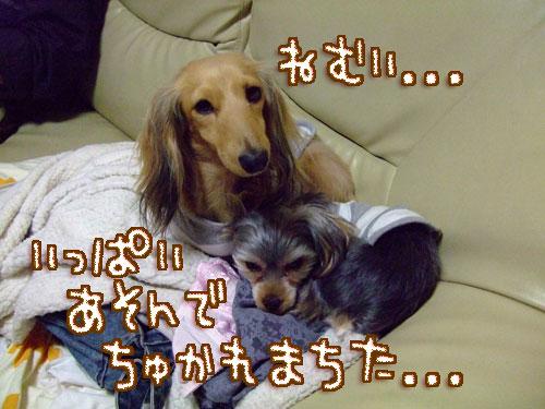 20080127-053.jpg