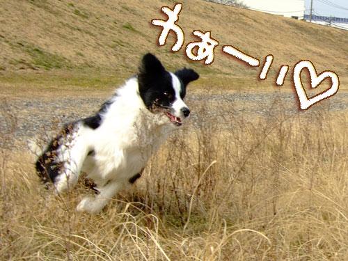 20080201-081.jpg