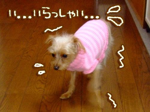 20080208-002.jpg