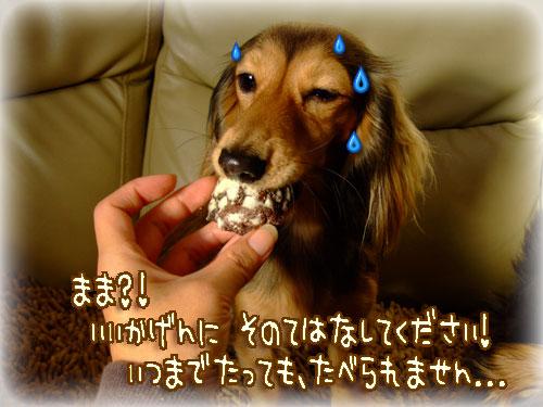20080214v-018.jpg