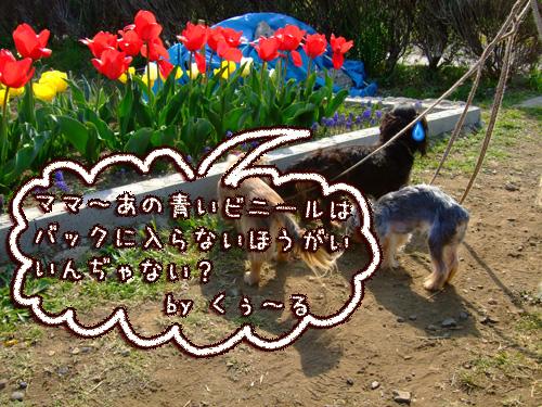 20080406-001.jpg