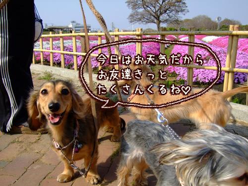 20080406-022.jpg
