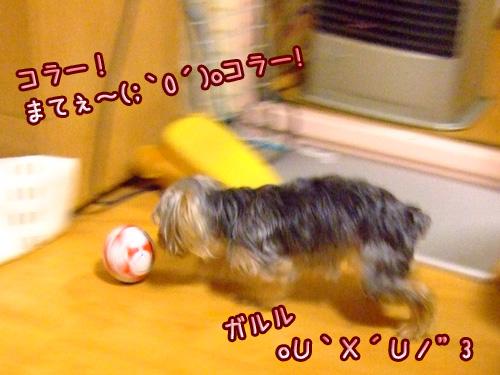 20080514-118.jpg