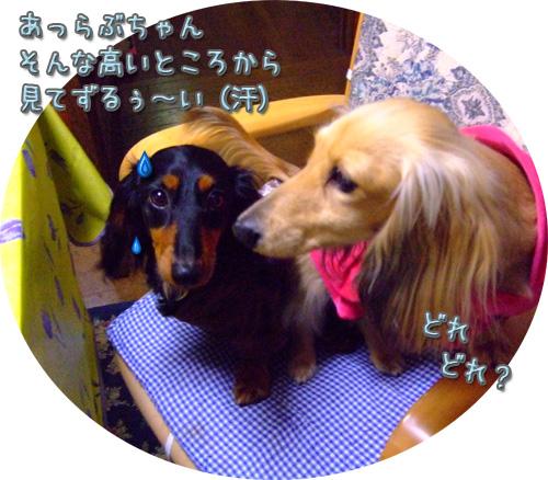 20080514-155.jpg