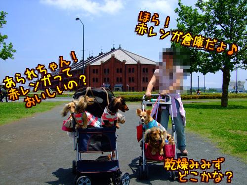 20080606-022.jpg
