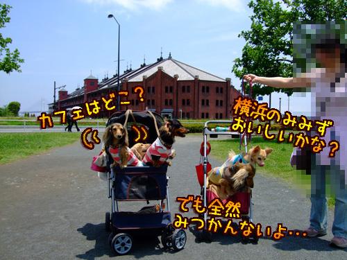20080606-023.jpg