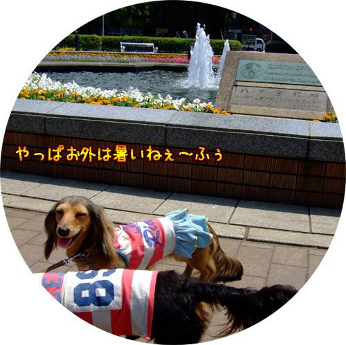 20080606-049.jpg