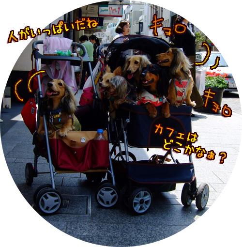 20080606-062.jpg