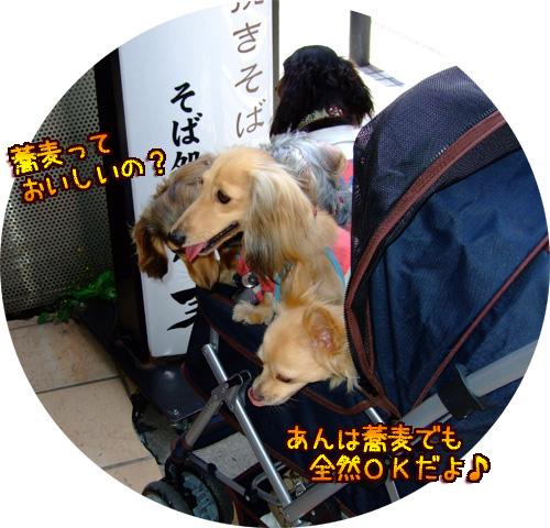 20080606-070.jpg