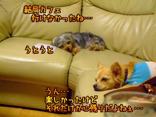 20080606-099.jpg